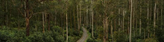 View from the Noojee Trestle Bridge by Simon Yeo on Flickr 960x250 75pc